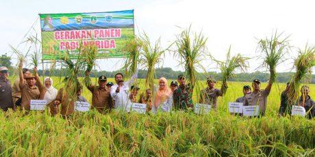 Panen Raya 70 Hektar, Bupati Irna Tegaskan Pandeglang Siap Suplai Beras Jabodetabek